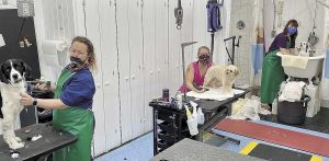 Goldwood Kennels Groomers